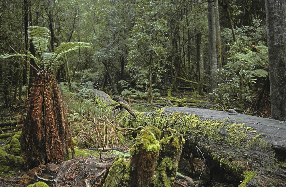 Mt. Field, Tasmania, 2004. ©Okaimal
