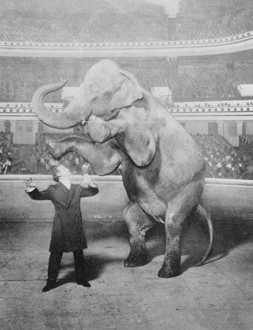 Houdini-y-Jennie,-la-elefanta,-actuando-en-el-Hippodrome-de-Nueva-York-(Library-of-Congress)