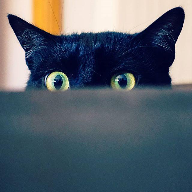 @cat13miau