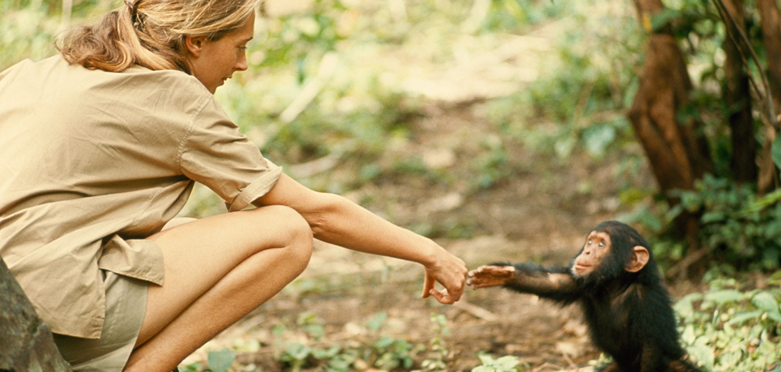 Jane Goodall. Hugo Van Lawick. National Geographic Creative.