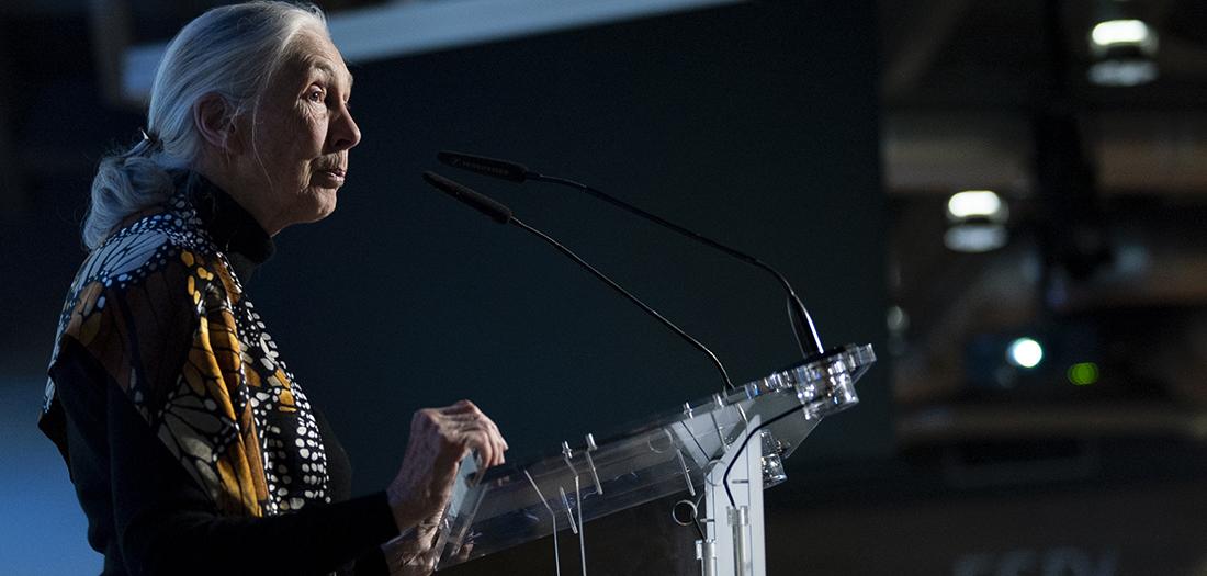 Jane Goodall en su charla en el auditorio.